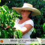 Cafeicultora Maria Leide Santana Concurso Florada Café Especial 3 Corações